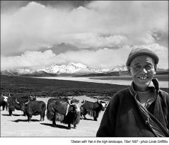 Tibetan-with-Yak-L'scp