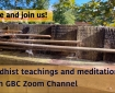Online Buddhist Meditation group